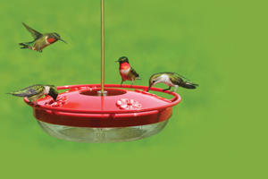 Wild Birds Unlimited High Perch Hummingbird Feeder